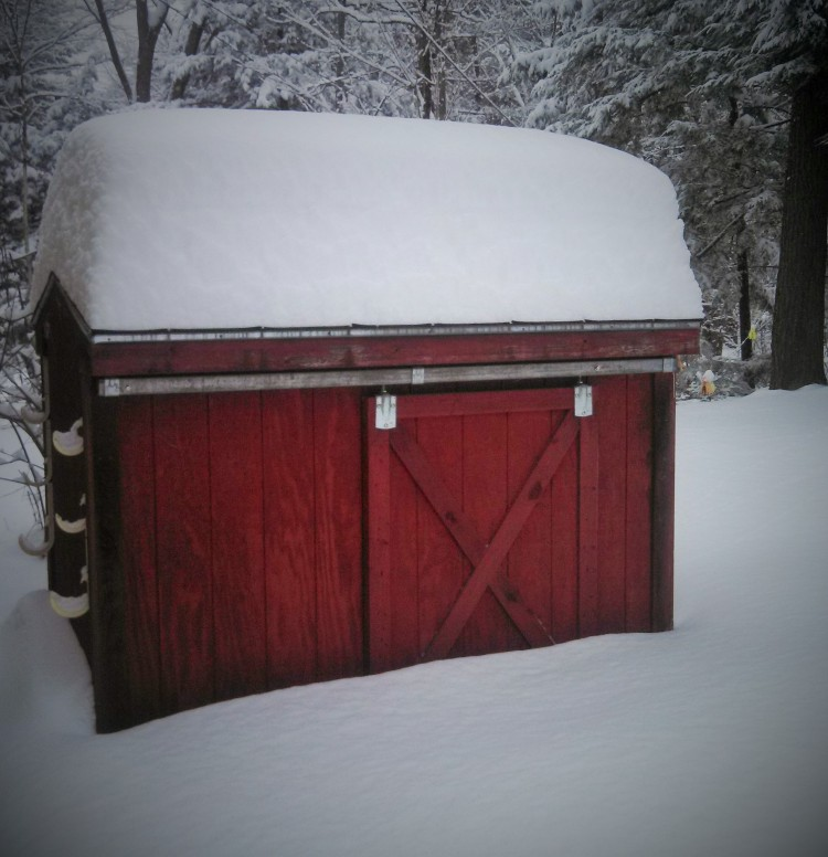 snowy-sunday-pool-shed