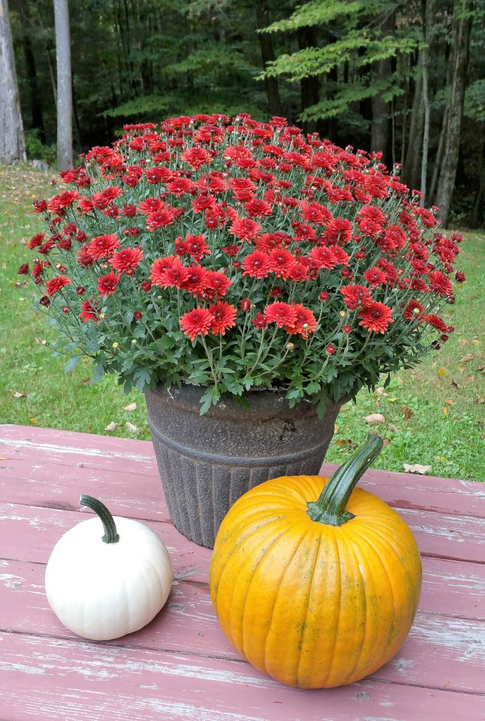 pumpkins-and-mums