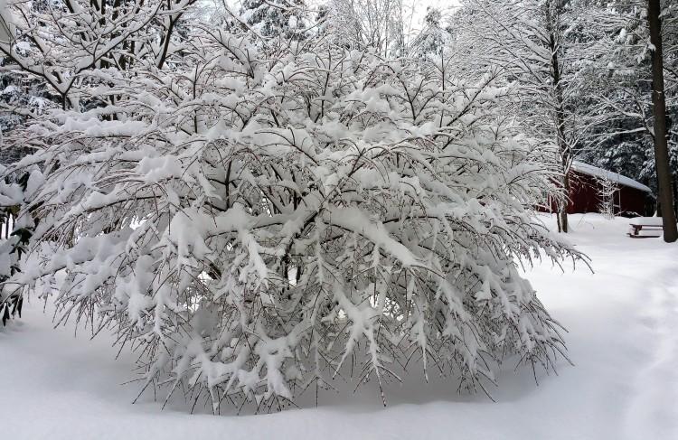 white christmas 12252017 (2)